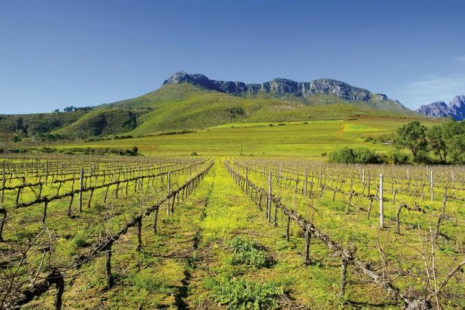 Schöne Weinregion