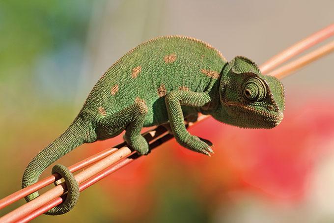 Tier- und Pflanzenwelt
