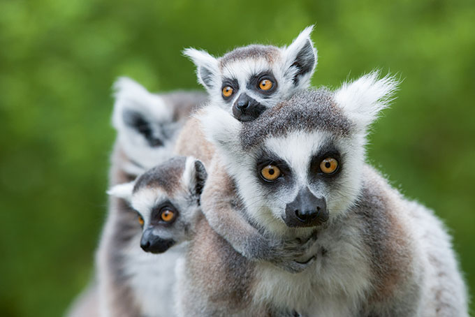 Auf nach Madagaskar