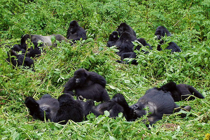 Tagesablauf eines Gorilla-Trekking