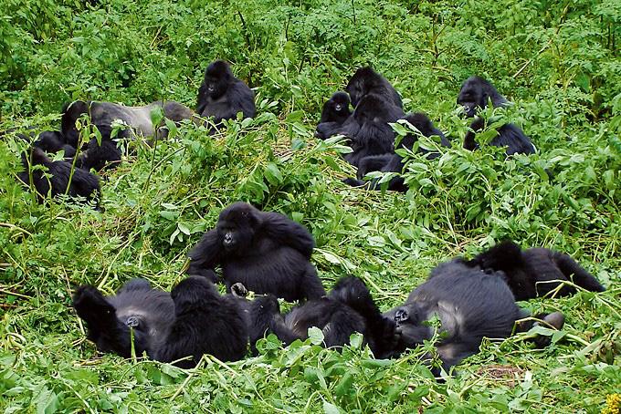 Programme du jour pour suivre les traces des gorilles