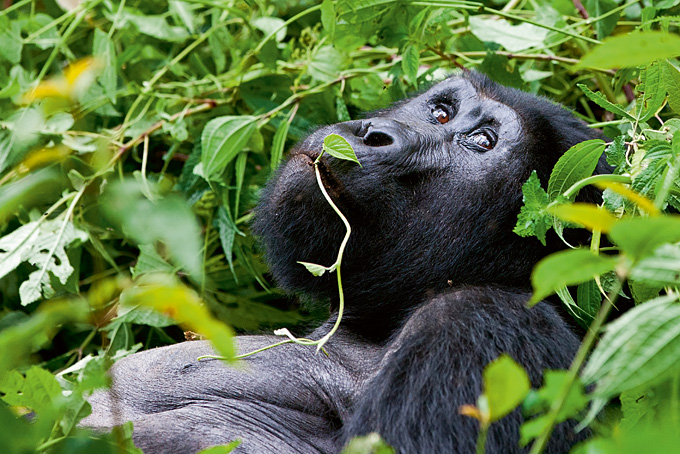 Aussergewöhnliches Ruanda
