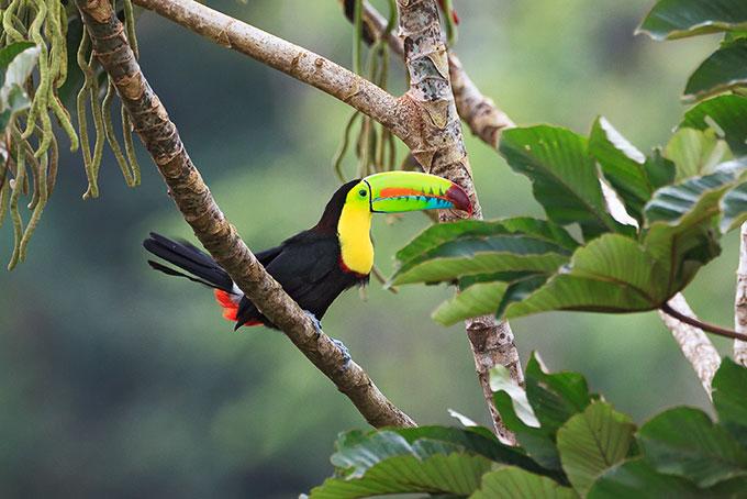 Costa Rica – ein grünes Paradies
