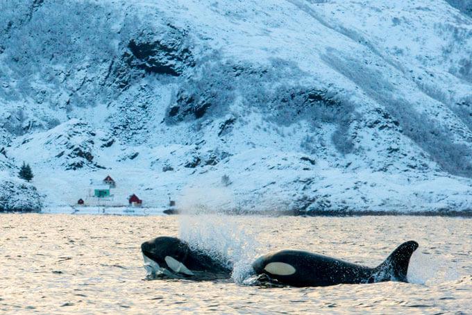 Fünf Gründe, im Winter nach Norwegen zu reisen