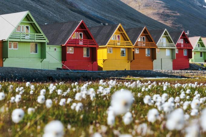 Scheuchzers Wollgras in Longyearbyen, Spitzbergen