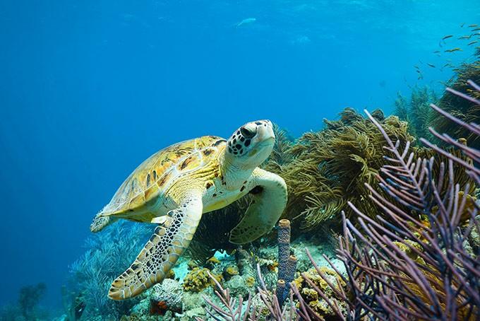 Tauchen im Unterwasserparadies