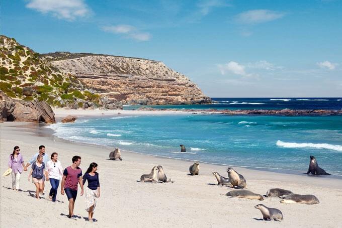 Seelöwen an der Seal Bay