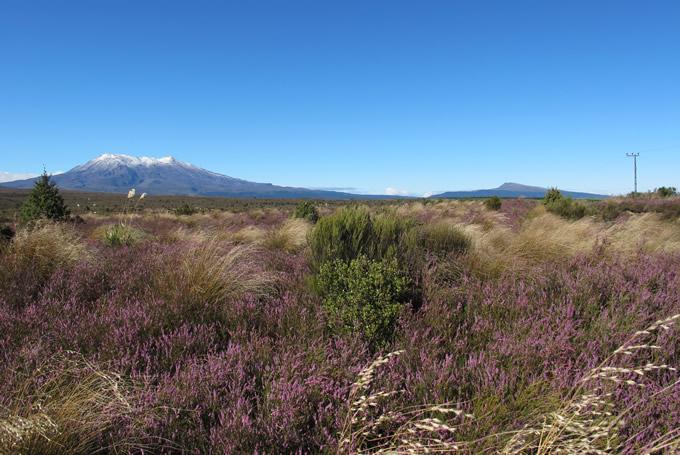 Tongariro Nationalpark mit Blick auf Mt. Ruapehu und Mt. Ngauruhoe