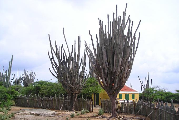 Eingang des Washington Slaagbaai Nationalparks im Norden Bonaire's