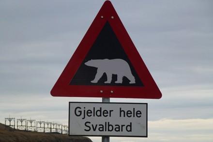Warnung von Eisbären