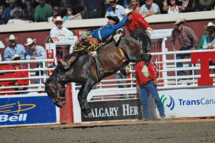 Rodeo Show an der Calgary Stampede