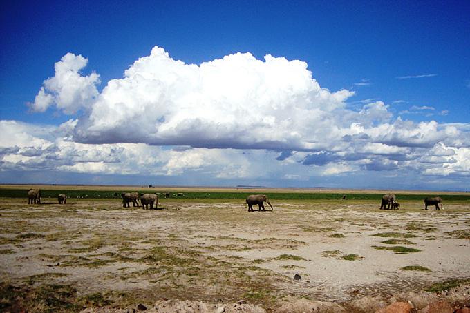 Elefantenherde im Amboseli Nationalpark