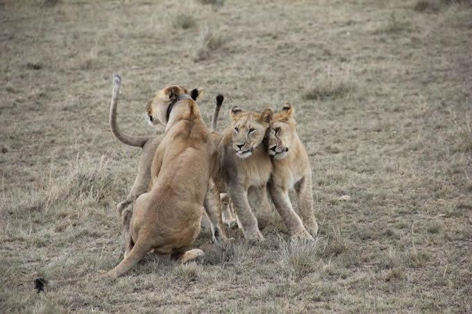 Tierwelt und Badevergnügen – Kontraste in Tansania