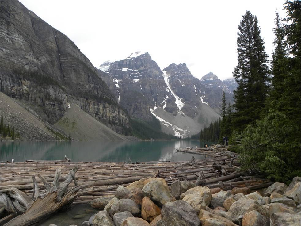 Westkanada, Auge in Auge mit Braunbär und Orka