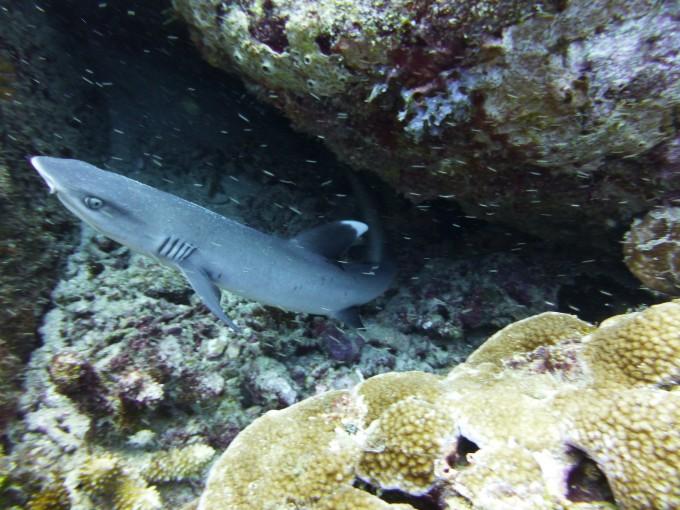 Haie sieht man häufig