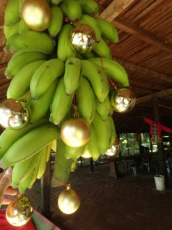 Bananes de Noël