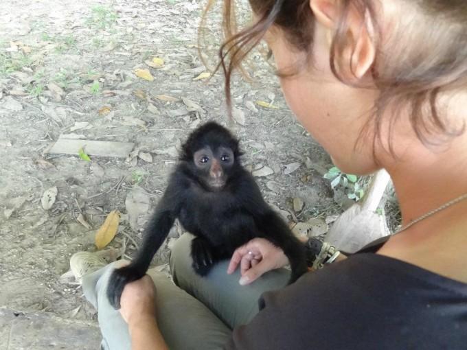 Le comportement de ces singes est similaire à ceux de l'Homme. Ils peuvent être amicaux, curieux, joueurs et même jaloux.