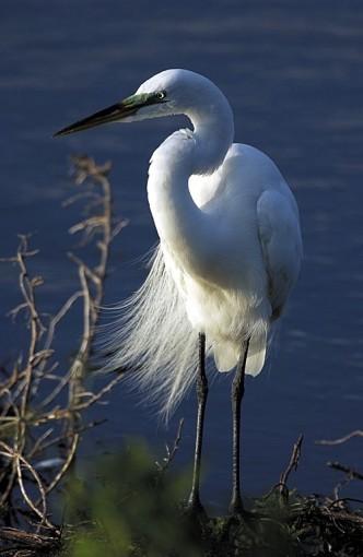 Héron lors de notre tour en canoë dans les Everglades