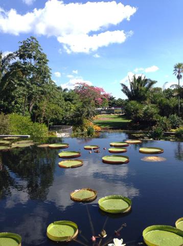 Le «Brazilian Garden» au jardin botanique de Naples