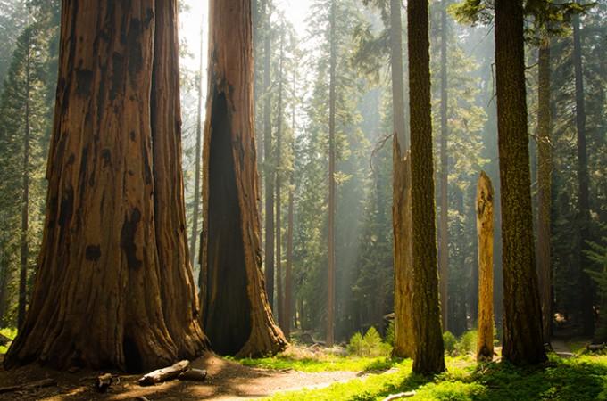 Sequoia Nationalpark, Kalifornien