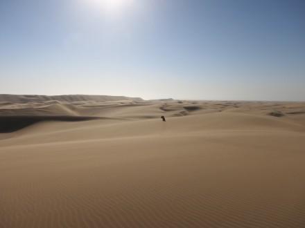 Wunderschöne Wüstenlandschaft in Namibia