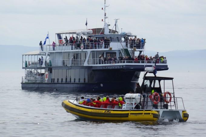 Whalewatching mit einem gedeckten Boot oder einem Zodiac
