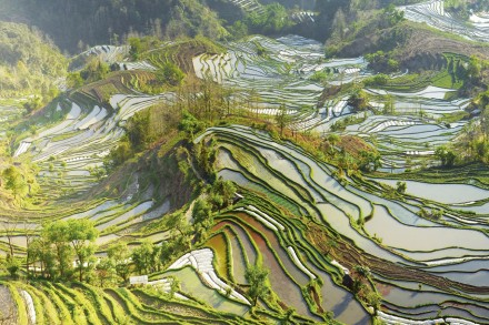 Chinas faszinierende Reisterrassen