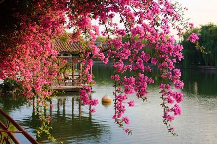 Blütenzauber in Kunming
