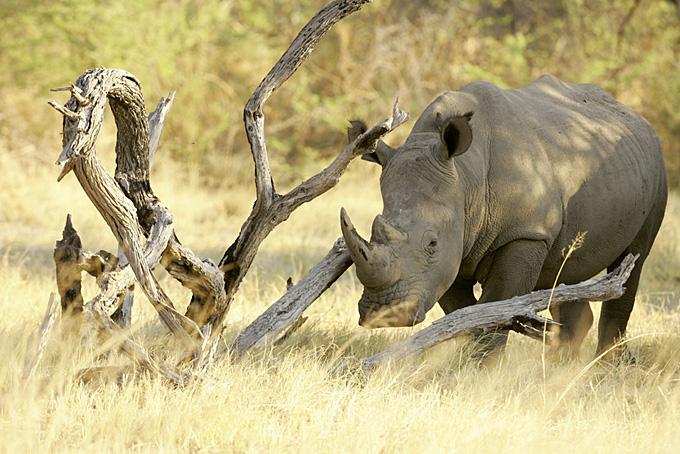 Zehn Gründe für eine Reise nach Südafrika