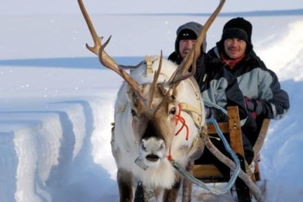 Einmalige Erlebnisse auf einer Rentierfarm in Lappland