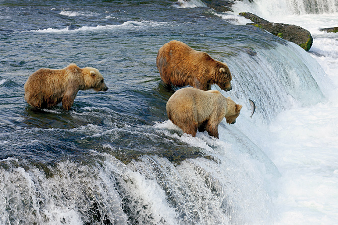 Bärenbeobachtung im Brooks Lodge vor dem Brooks Wasserfall