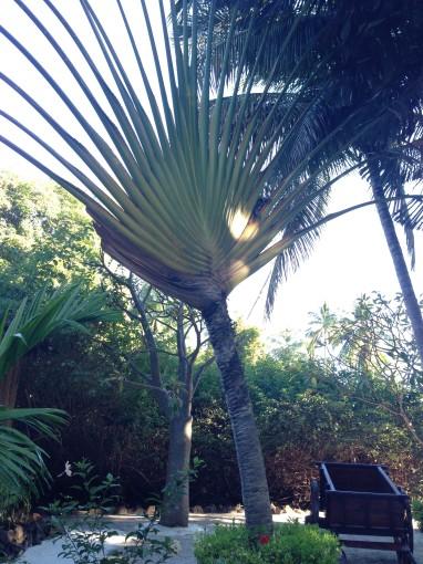 Pflanzen auf der Insel