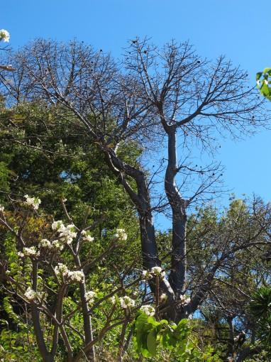 Ein Baobab Baum