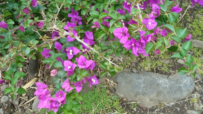 Blumen aus dem Parc exotica in St. Pierre