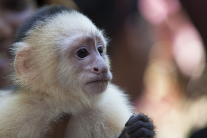 Affen beobachten im Monkey Jungle Miami (Photo Credit: Greater Miami Visitors & Convention Bureau)