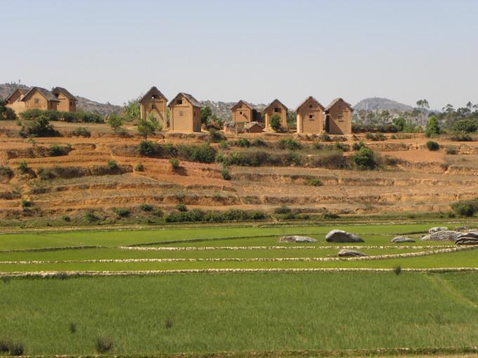 Reisfelder während der Zugfahrt bestaunen