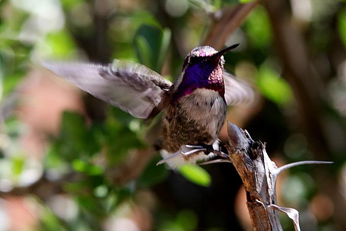 Auch ein Kolibri-Haus gibt es