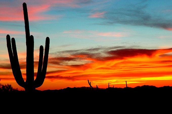 Der Saguaro Nationalpark