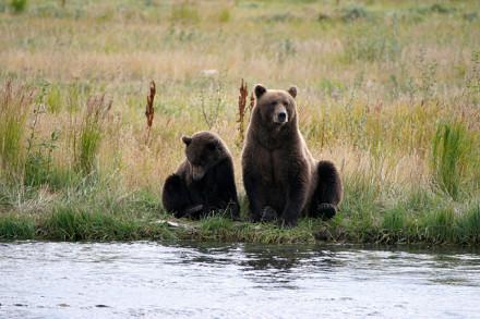 Mama mit Cubb in Alaska