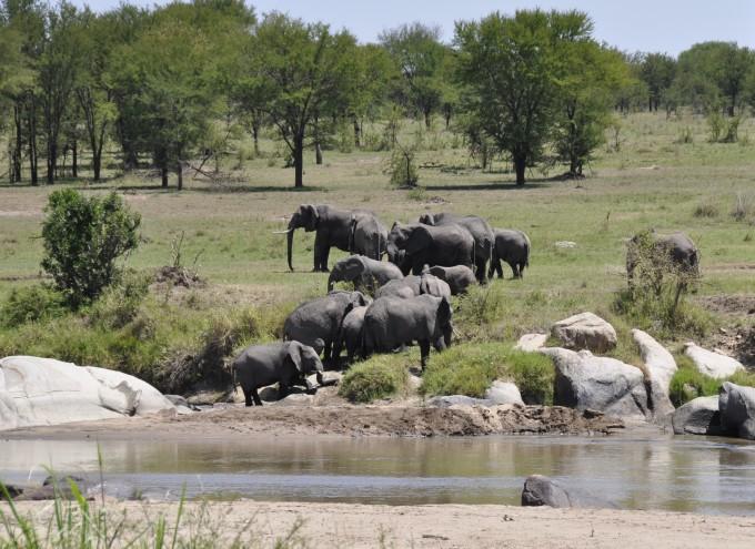Elefanten beobachten