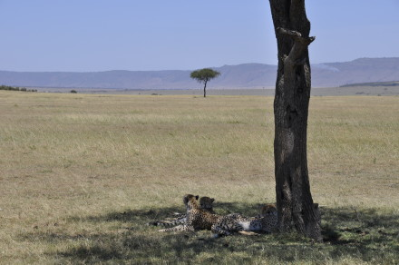 Auf der Safari wilde Tiere beobachten