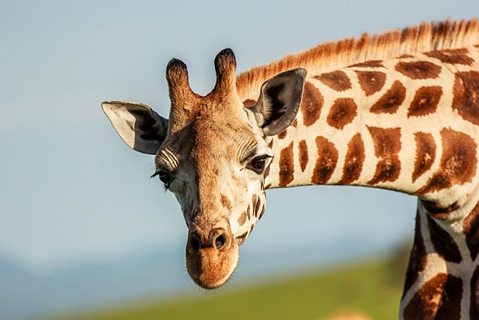 Wer beobachtet hier wen im Kidepo Nationalpark?