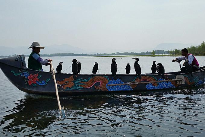 Fischer mit Kormoranen auf dem Erhai See