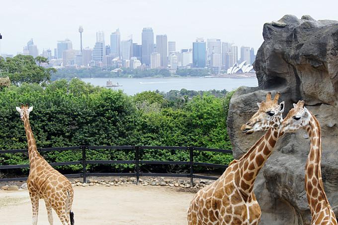 Aussicht vom Sydney Zoo