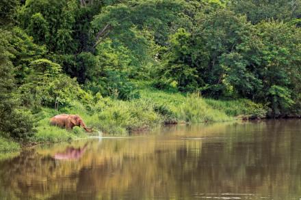 Elefantenspuren im Regenwald