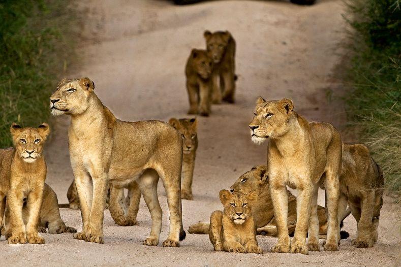 Malariafreie Safarigebiete in Südafrika