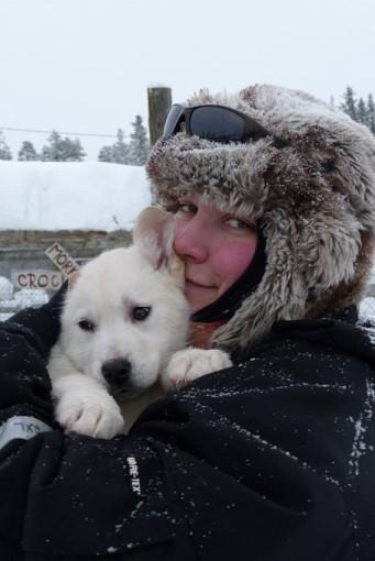 Husky Welpen im Hunde-Camp