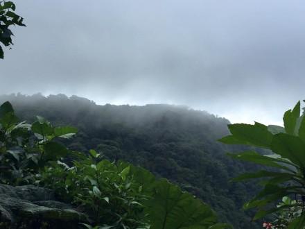 Regenwald Monte Verde