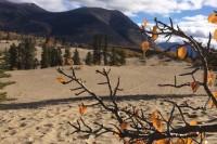 Carcross Desert - die kleinste Wüste der Welt