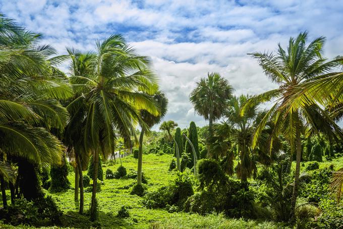 Dominica`s Natur